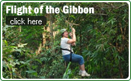 Fight of the Gibbon