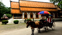 Horse Carriage is the signature of Lam-Pang Town : JC Tour