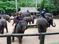 Elephant Conservation Center in Lampang : JC Tour
