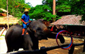 Elephant Safari and Long Neck : JC Tour