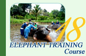 Elephant Training Course