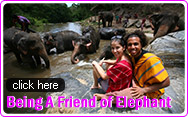 Being A Friend of Elephant