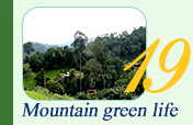 Mountain Green Life